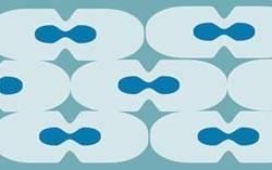 delenie-buniek